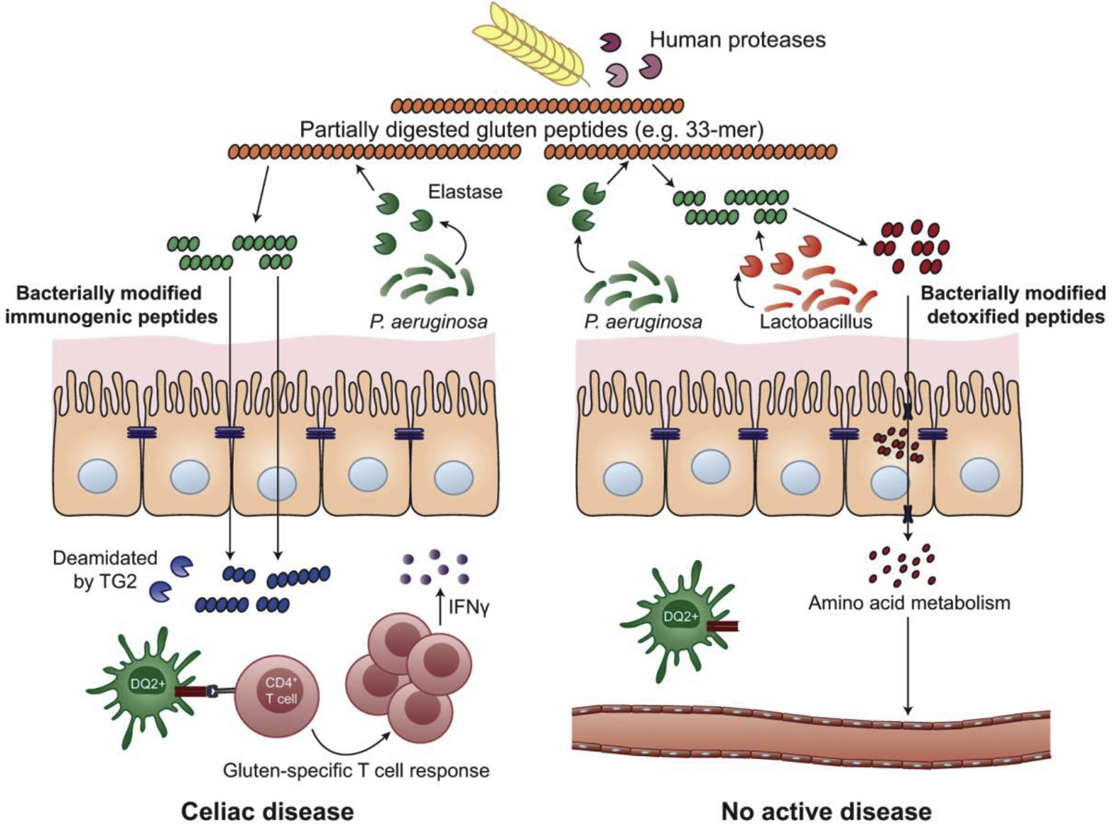 cancer human genetic disease