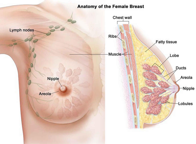 Cancerul la sân: cum poate fi diagnosticat şi tratat