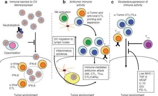 papillomavirus oncolytic virus