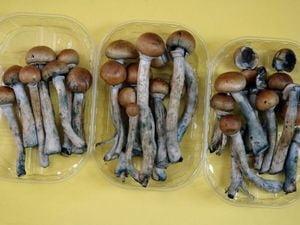 De ce îți dau ciupercile halucinogene tripuri atât de intense