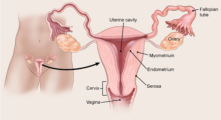 ovarian cancer kill you ricerca del papilloma virus nelluomo