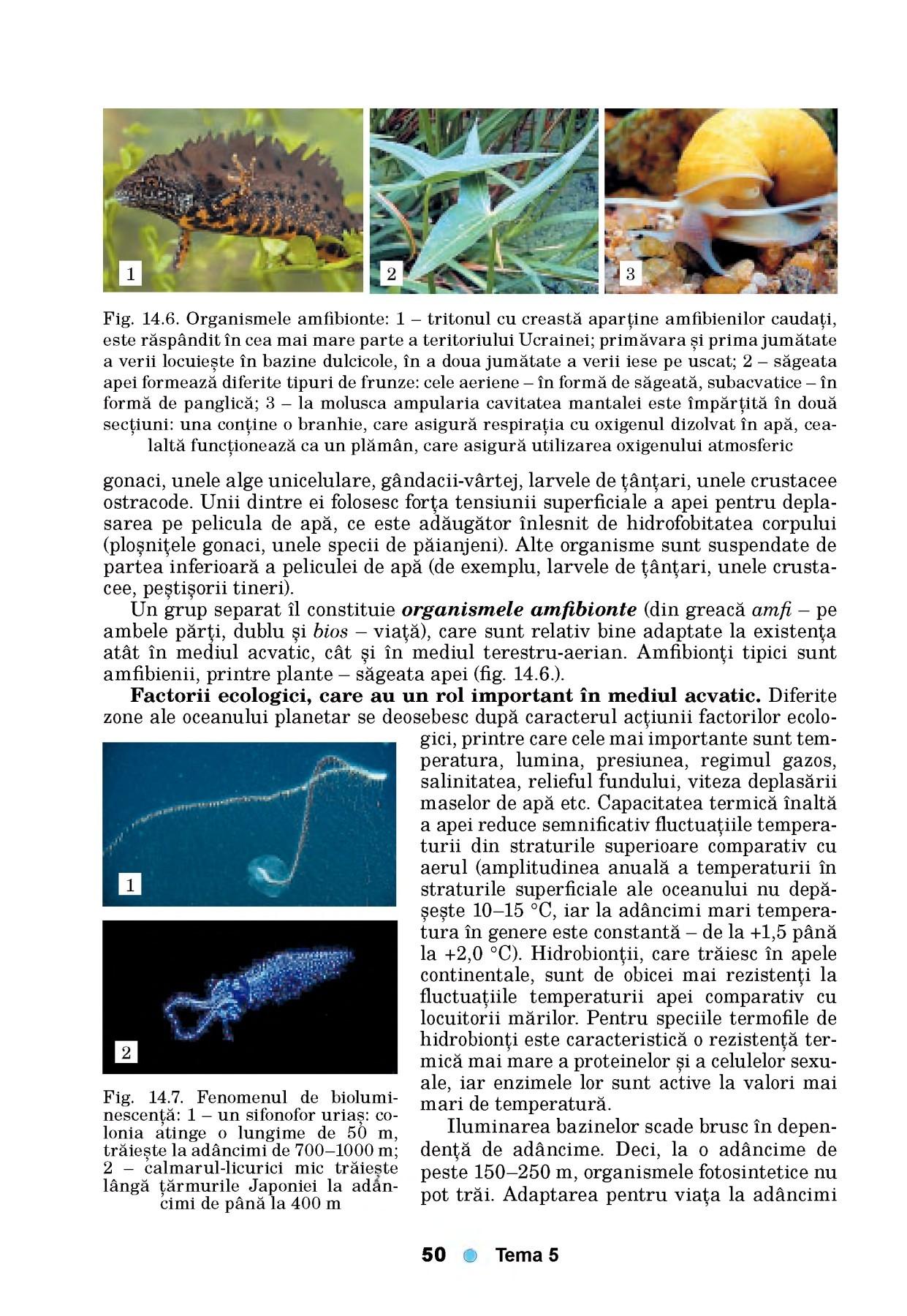 activitatea fiziologica a viermelui marului laryngeal papilloma ct