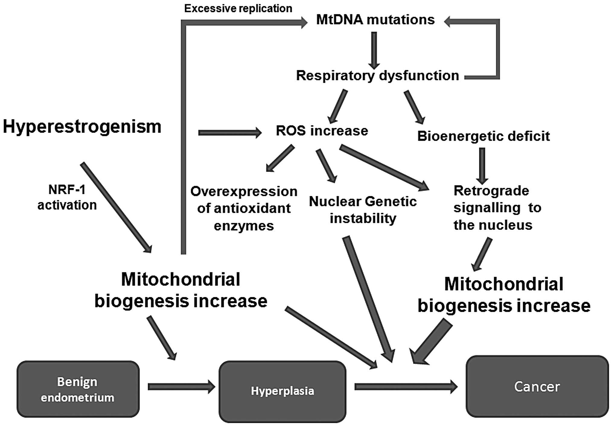 Diagnostic Pathology: Molecular Oncology: Mohammad A. Vasef ·   Books Express
