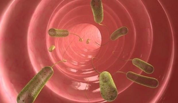 virus papiloma humano ingles cancerul de col uterin simptome
