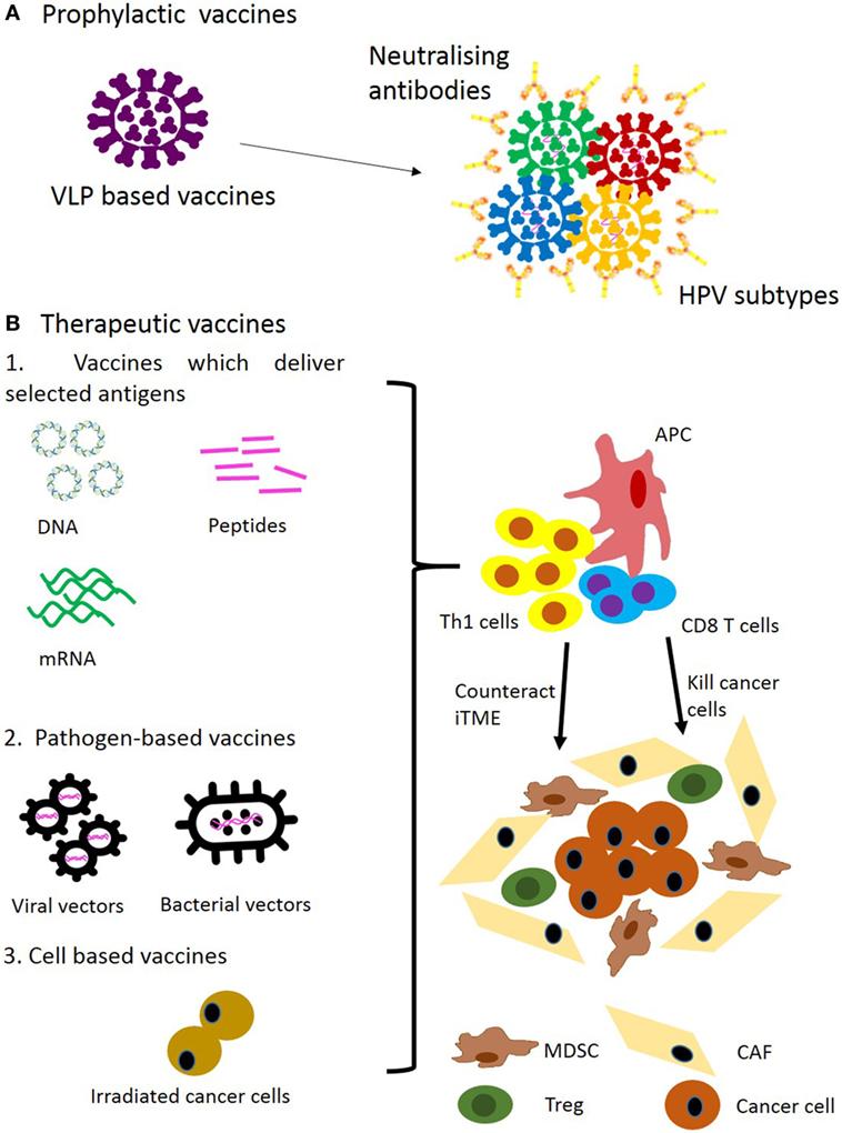 HPV   Pro Vaccin