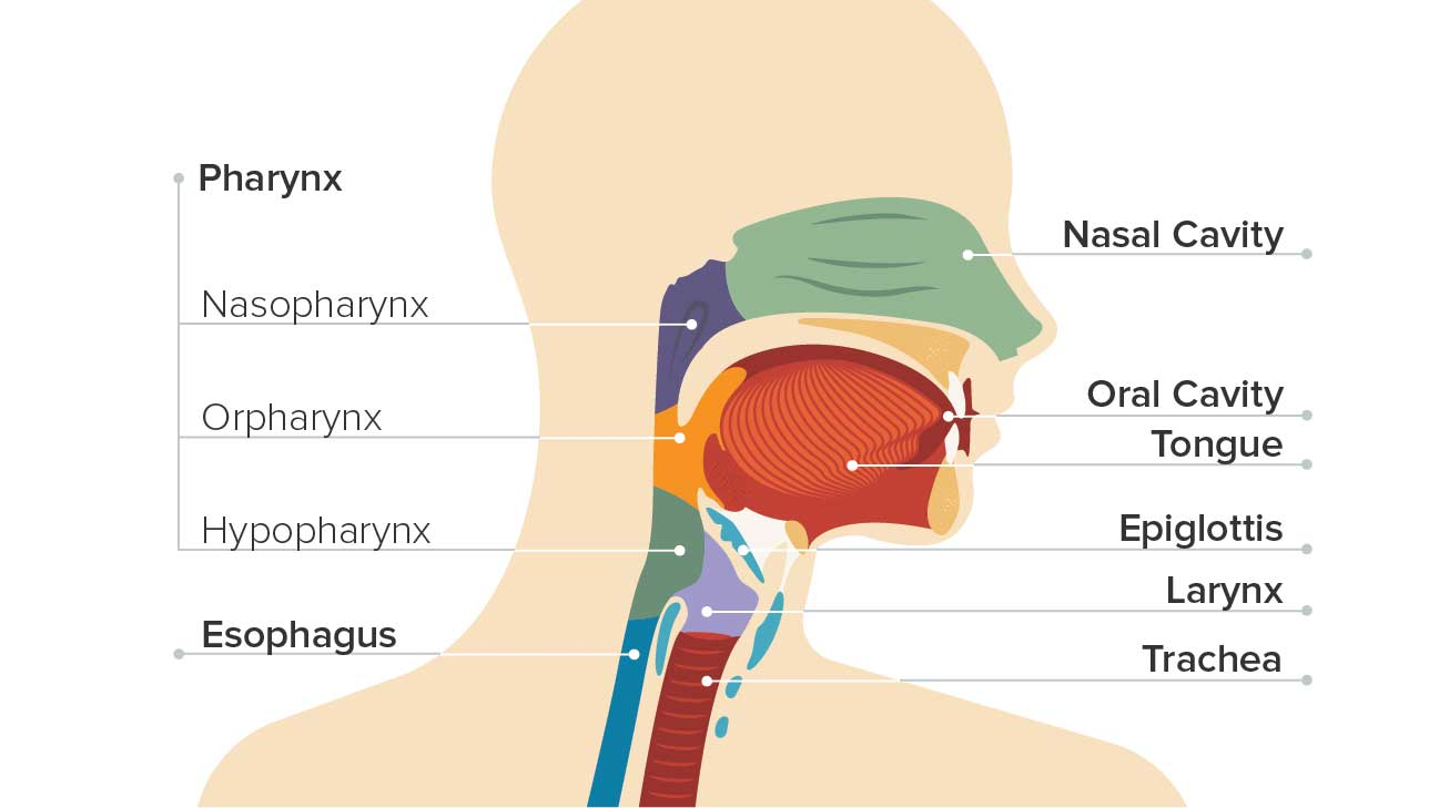 Adenopatia metastatică primitivă cervicală din perspectiva medicului ORL