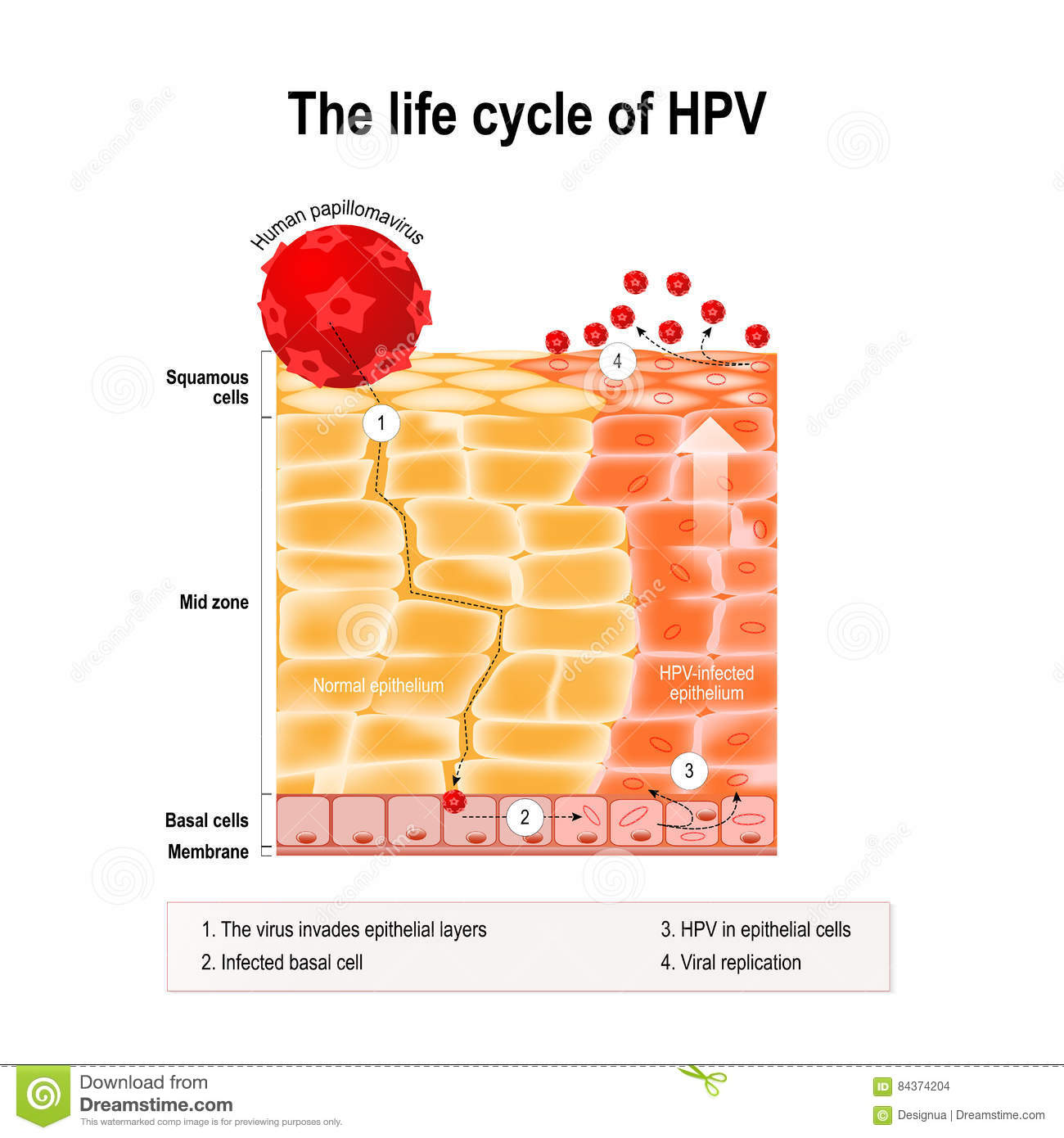 human papilloma virus airborne how often does hpv cause cancer in males