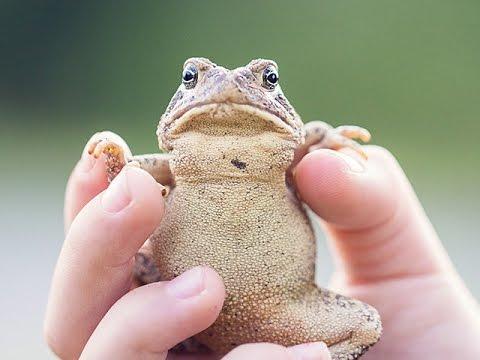 warts on hands from frogs papillomavirus vaccine history