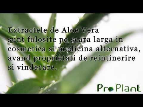 detoxifiant cu aloe vera papillomavirus porteur sain