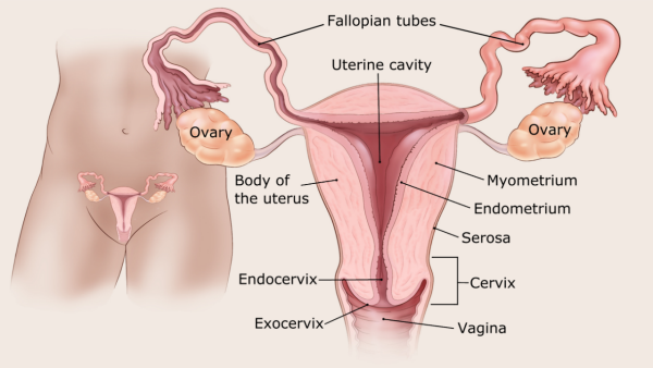 types of uterine cancer