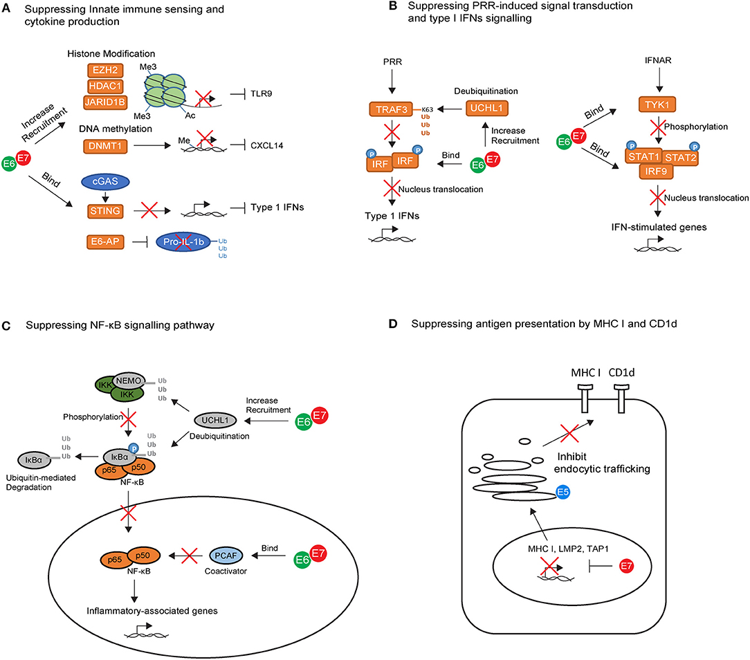 papillomavirus kurkussa hepatocellular cancer medscape