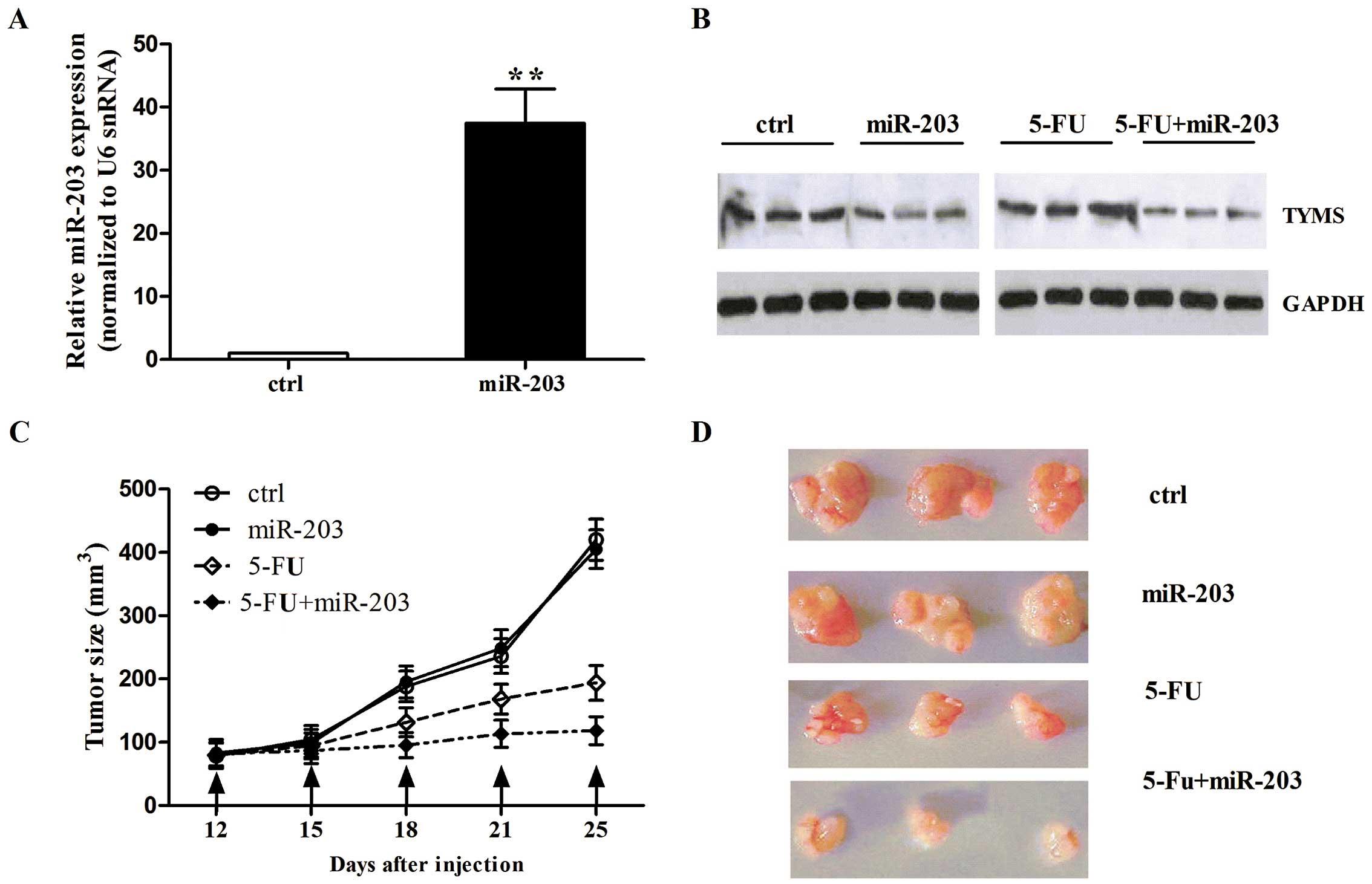 colorectal cancer 5-fluorouracil