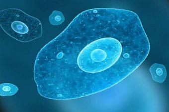 cancer de piele benign cancer cerebral con metastasis