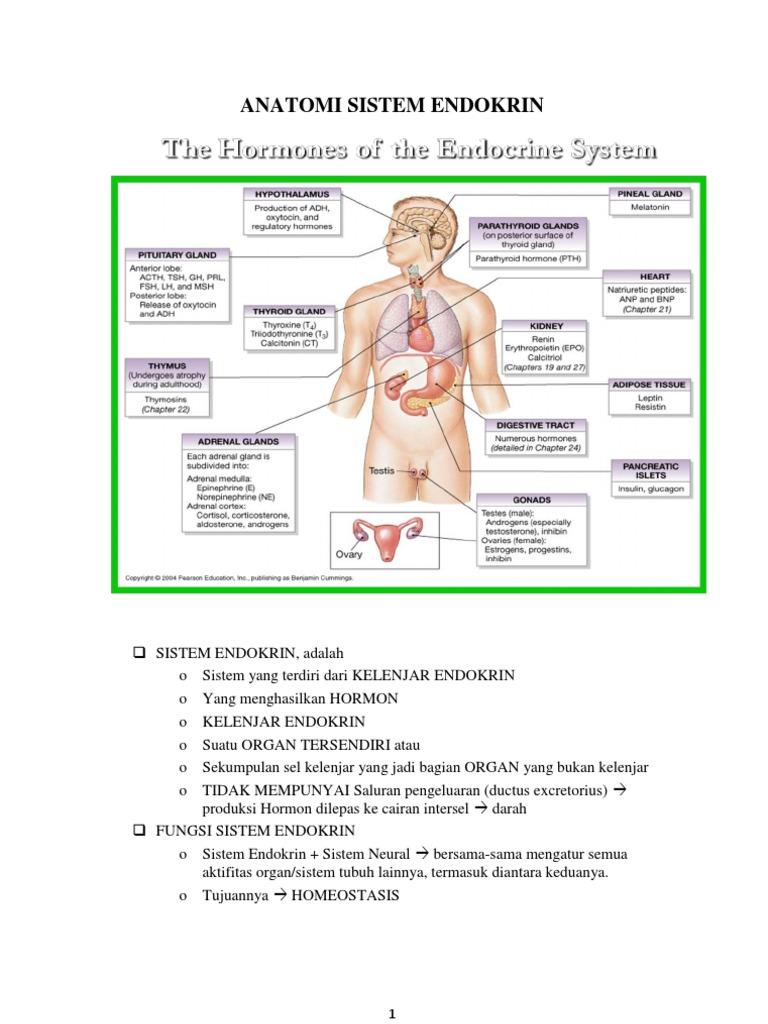 Nutritie si remedii naturale pentru oboseala suprarenala