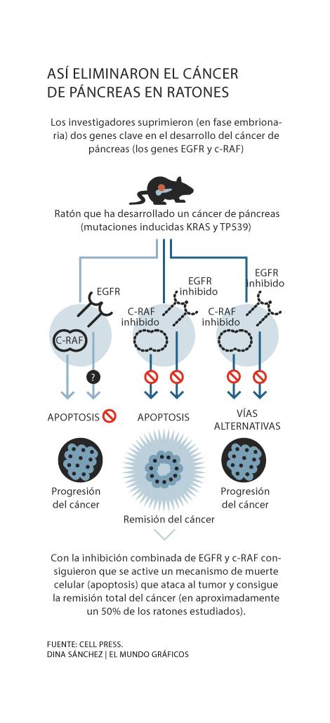 virus papiloma humano 6 y 11 viermi intestinali se transmit
