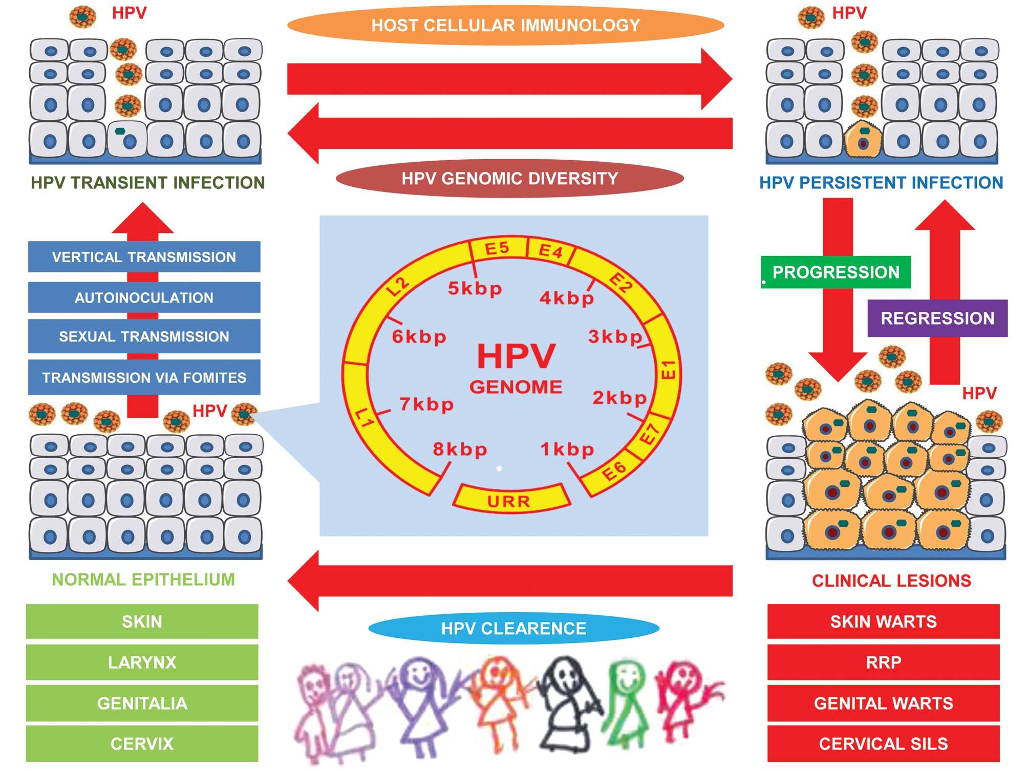 papillomavirus contamination cancer figado urina escura