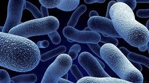 Bacterii   Itinerarii pontice