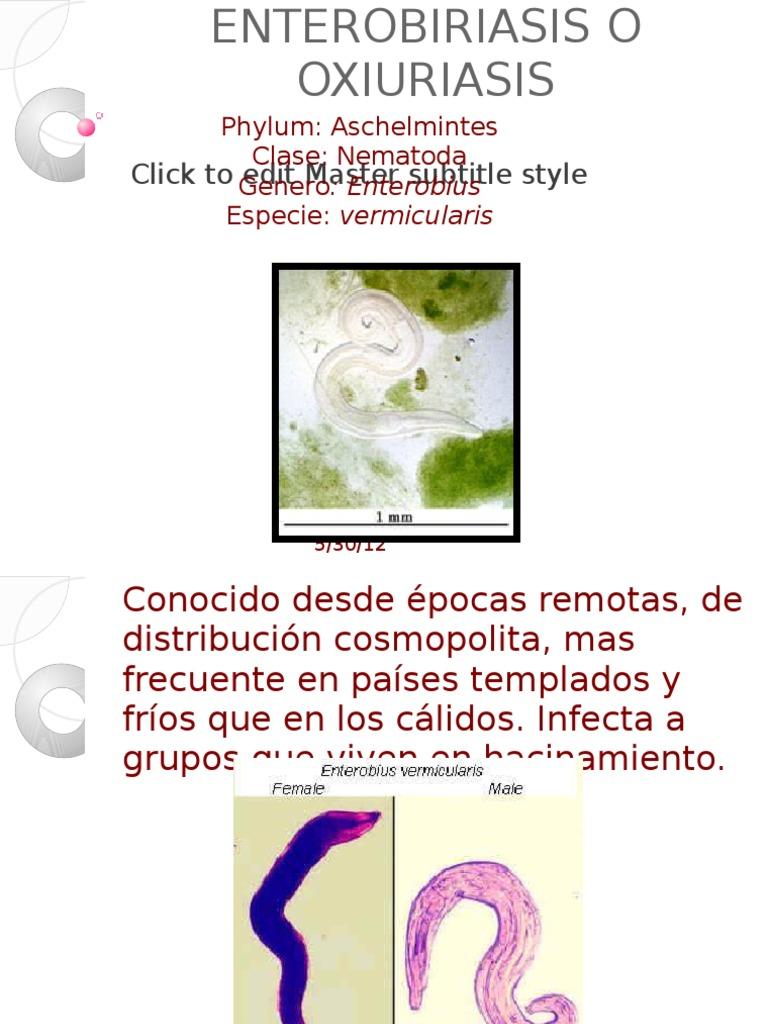 enterobius vermicularis y oxiuriasis