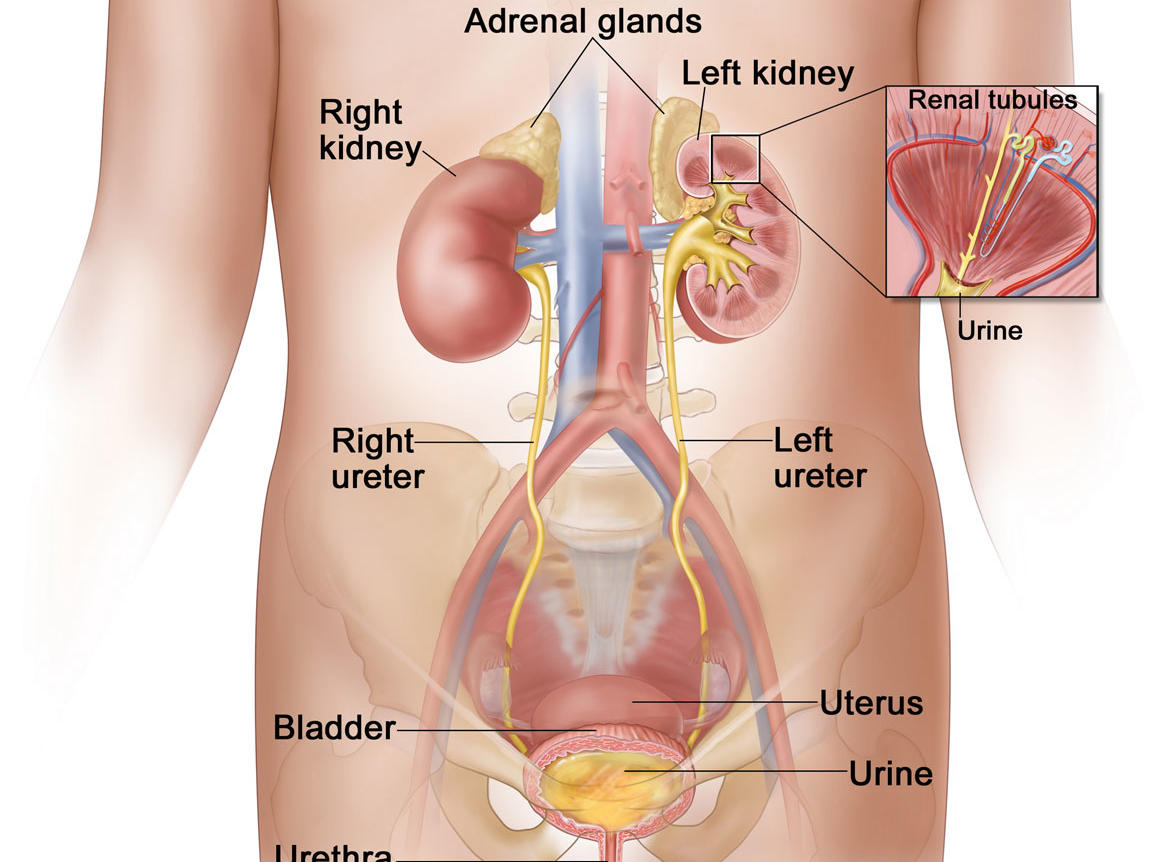cancer renal articulo