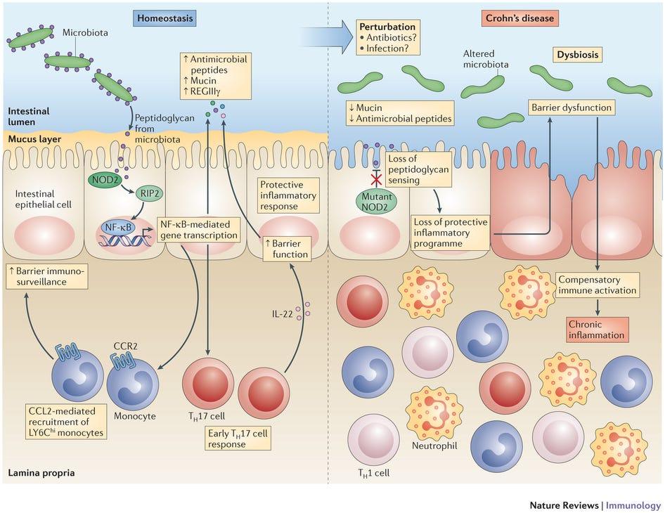 human papillomavirus skin rash