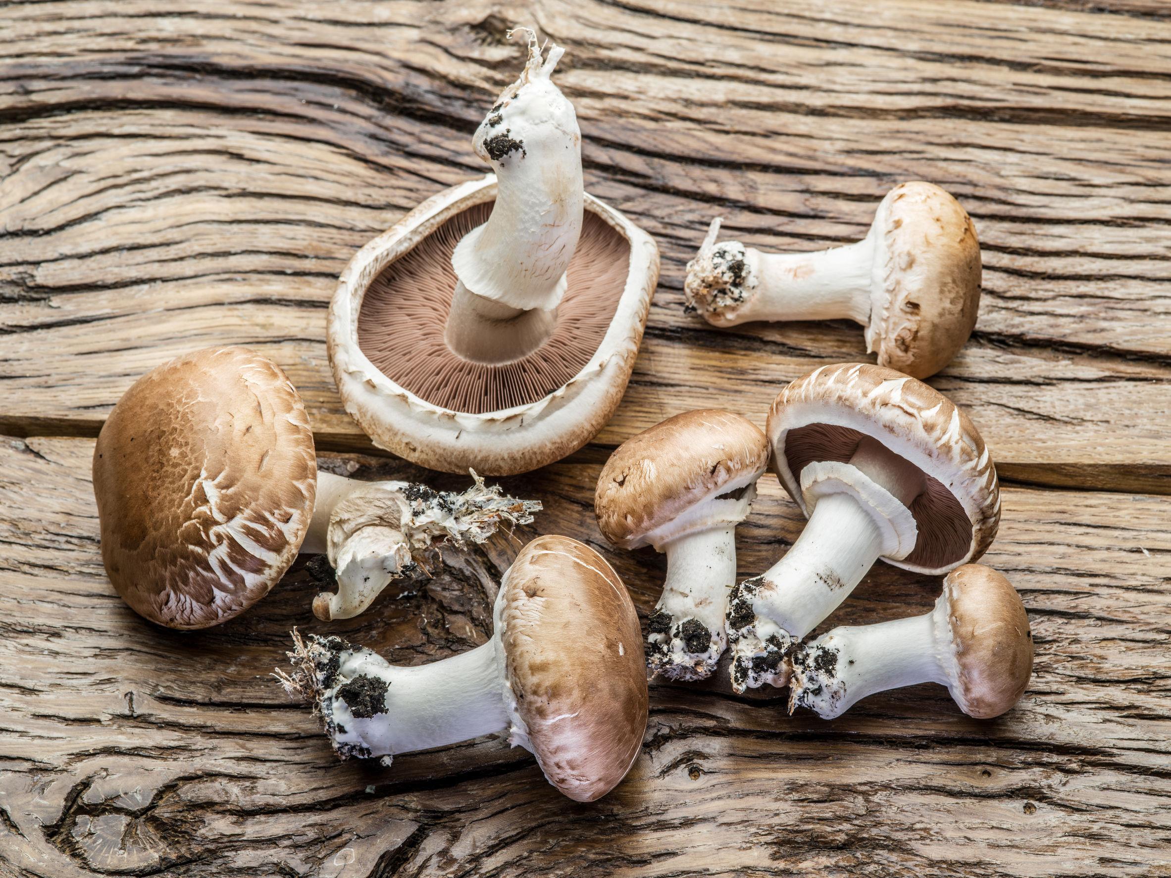 Cum să îți faci o afacere profitabilă cu ciuperci? | Ciuperci Forum