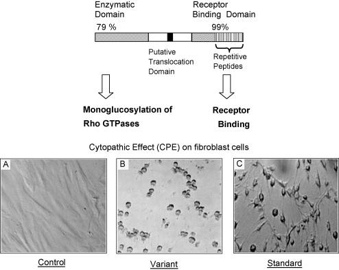 Rod Clostridium. Prezentace pro obor: Jan Smíš. íšek - PDF Free Download