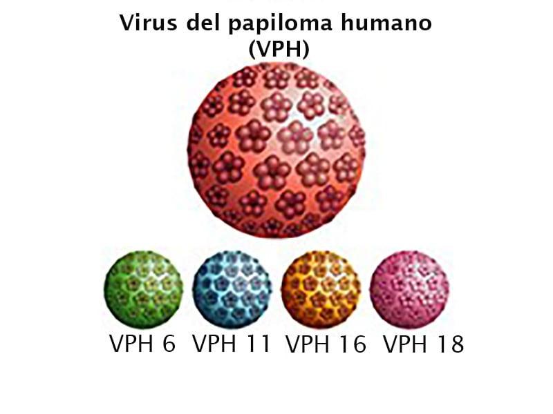 virus del papiloma humano en mujeres tipo 16 hpv was ist das genau