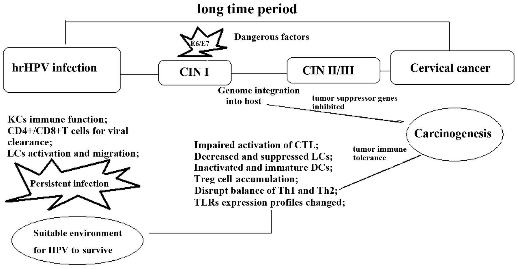 hpv infection and cervical disease a review detoxifierea ficatului dupa alcool