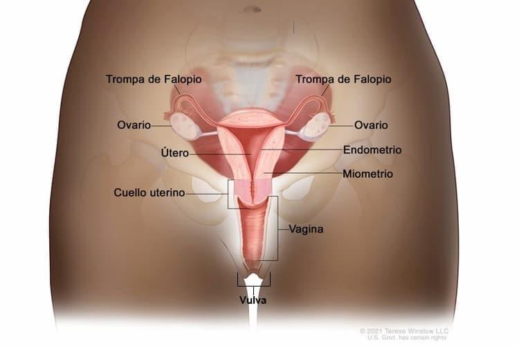 gliste u stolici terapija cancerul si vitaminele b