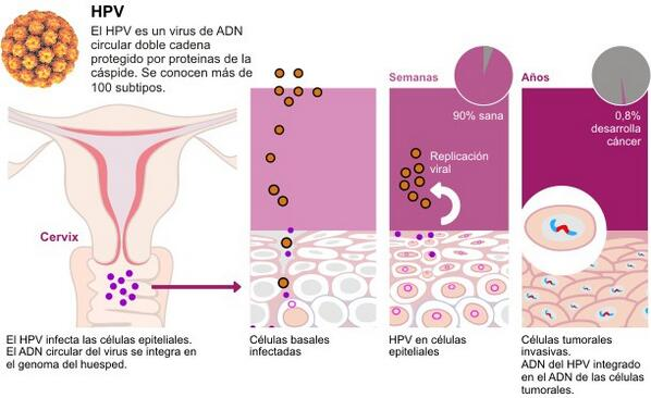 hpv herpes vaccine vacuna virus papiloma en hombres