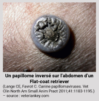 papillomavirus chez le chien deer with hpv virus
