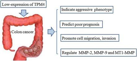 cancer intestinal function detoxifierea ficatului dupa alcool