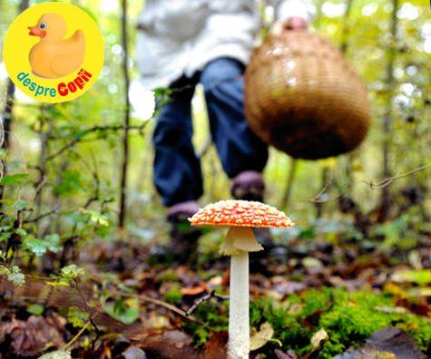 PRODUCTS > Ciuperci brune Jumbo calitatea I kg