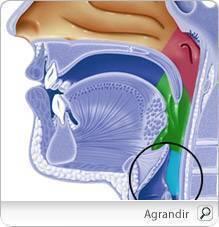 Le champignon shiitake serait efficace pour lutter contre le cancer du col de l'utérus