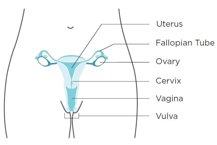 endometrial cancer and hpv wormex pentru viermisori
