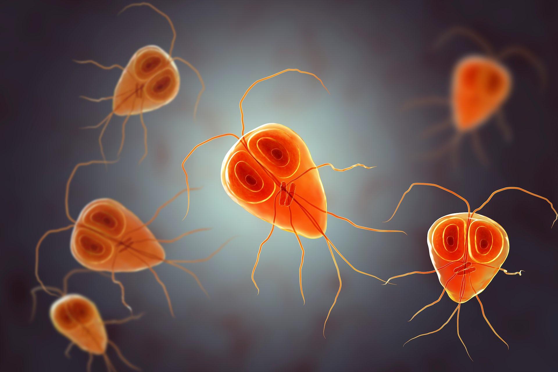 que enfermedad producen los oxiuros cancer maduva simptome