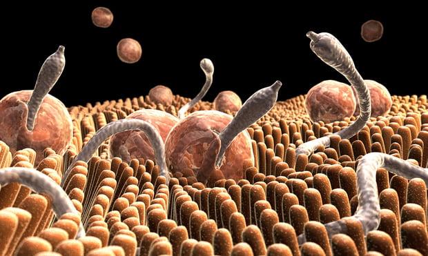 virus papiloma boca y garganta