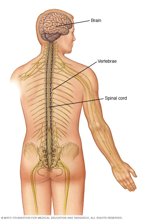 Neck and low back pain