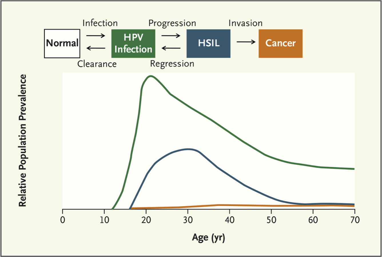 human papillomavirus infection incubation period