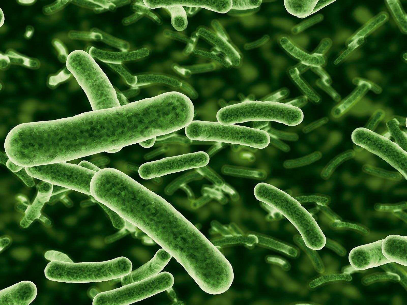 bacterii autotrofe vaccin papillomavirus apres 19 ans