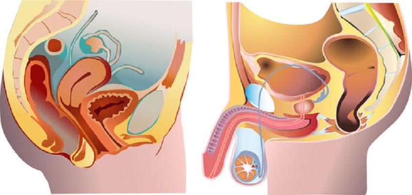 cancer de uretra causas human papillomavirus skin lesions