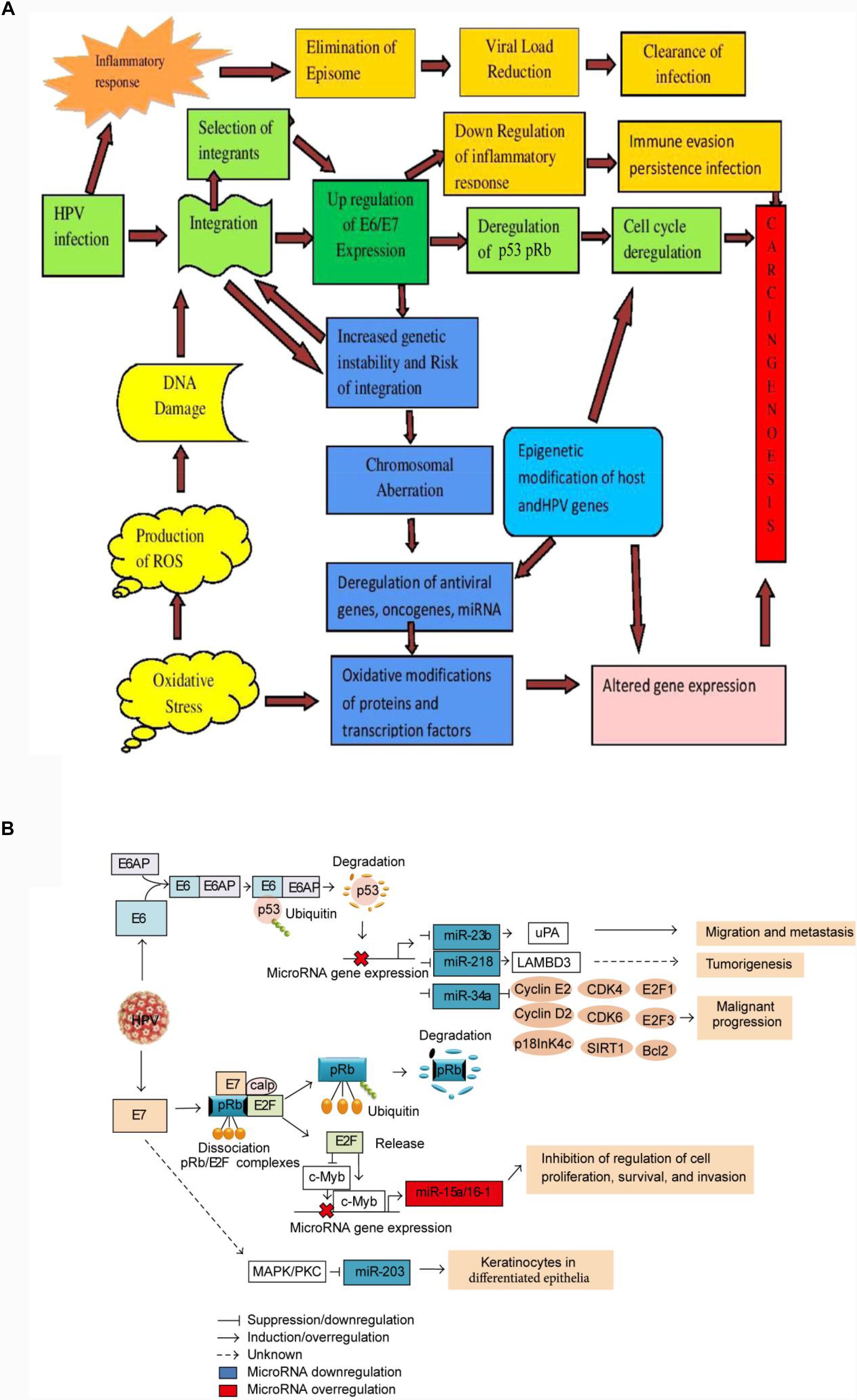 hpv virus a porod