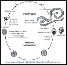 intestinal cancer biomarker ciuperci genitale