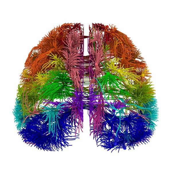 cancer cerebral biodescodificacion
