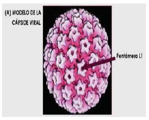 cancer de papiloma humano en hombres