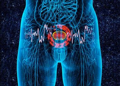 Epiteliu rata de secreție a prostatei