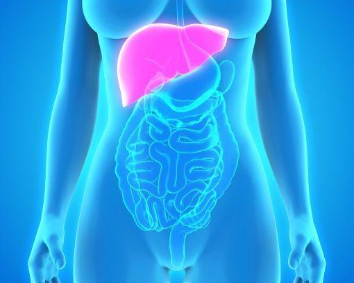 cancer hormonal du foie papillomavirus p16
