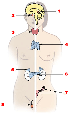 cancer pancreas nodule poumon