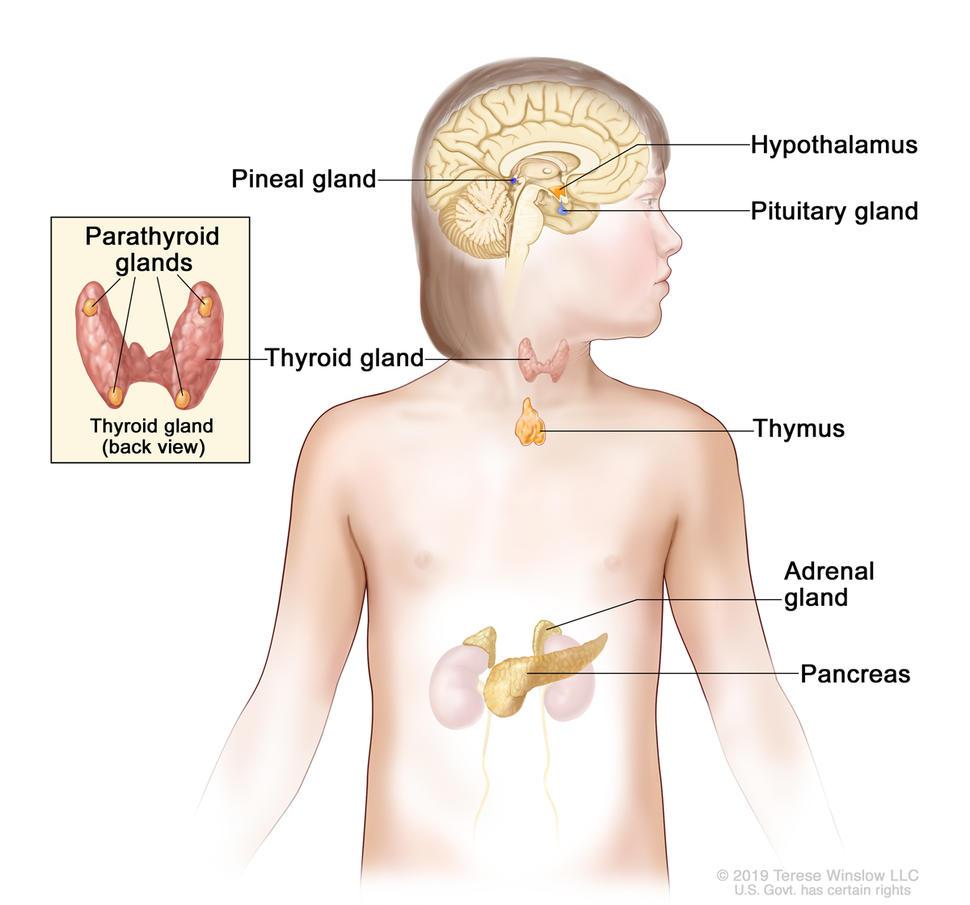 benign cancer cancerous helminth therapy autoimmune