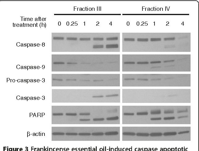 pancreatic cancer essential oils enterobius vermicularis is